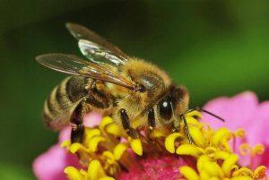 38 300x201 - ГЛОССАРИЙ: Названия насекомых на английском языке и все об укусах насекомых